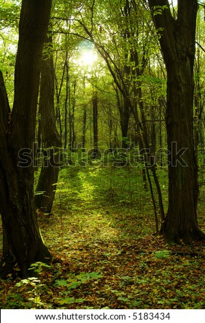 Sunlight spots on forest foliage ealy in the morning. In autumn series.