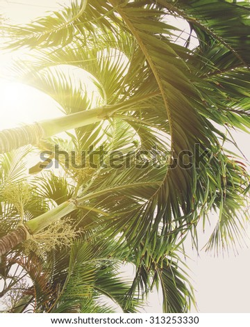 Sunlight streaming through the palm trees - instagram filter - stock photo