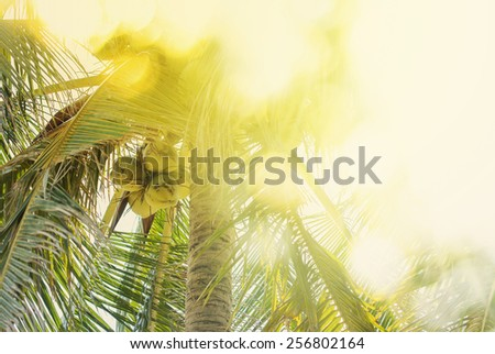 Sunlight through foliage of a tropical palm tree, nature background - stock photo