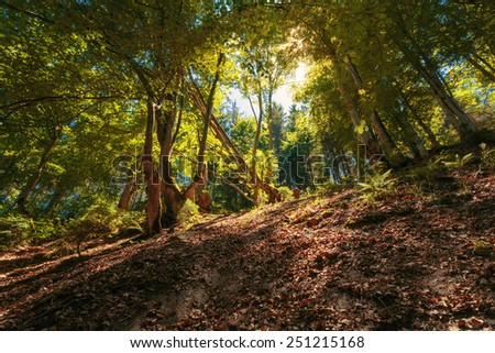 Sunlight through high trees in summer forest. - stock photo