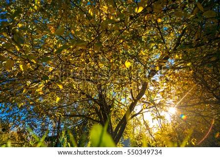 Sunlight through the tree in warm autumn