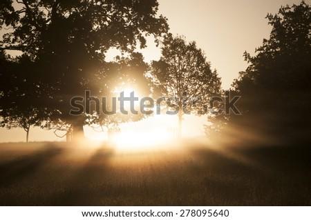 sunlight through the trees - stock photo