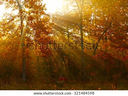 Sunlights in autumn forest - stock photo