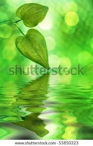 Sunlit leaves reflecting in water with blurred background - stock photo