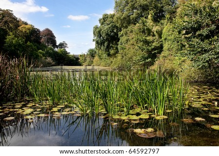 Sunlit Lush Green Lily Pond with Stone Bridge in Distance - stock photo