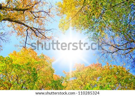 Sunlit Park Yellow Trees - stock photo