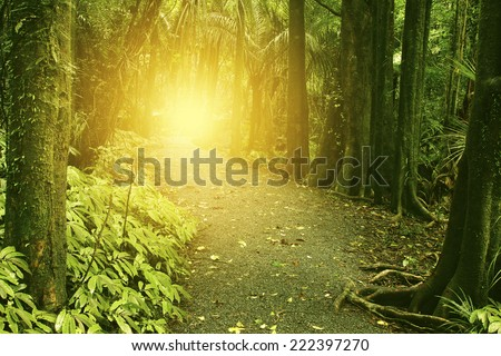 Sunlit trail in tropical forest - stock photo