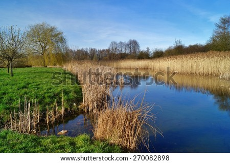 Sunny afternoon over the pond in the botanic garden - stock photo