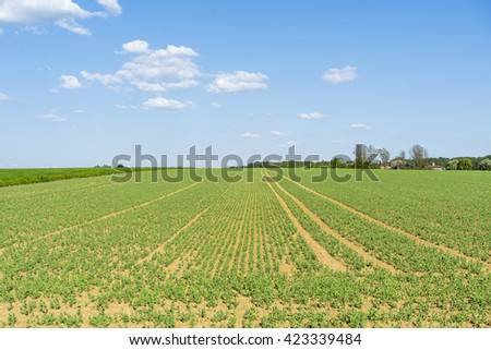 sunny agricultural scenery at a field with rows of small plants in Hohenlohe, a district in Southern Germany - stock photo