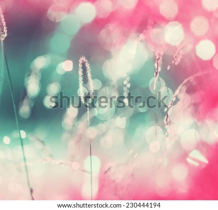 Sunny autumn grassland - stock photo