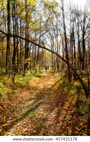 Sunny autumn landscape with beams, wood and footpath. - stock photo