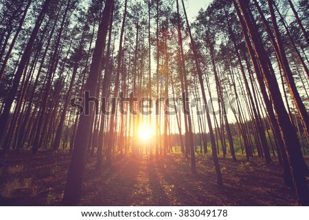 Sunny beams in the forest - stock photo