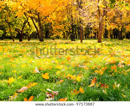 Sunny beautiful alley in autumnal park with vibrant colorful leaves