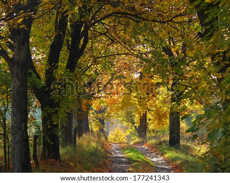 sunny colorful autumn road