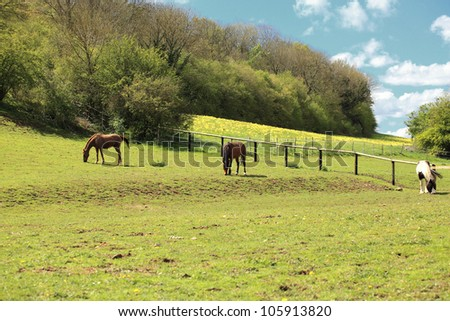 sunny countryside landscape with horses in the spring - stock photo