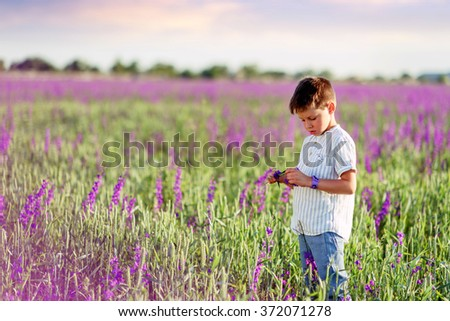 sunny day a little boy walks on the purple flowers - stock photo