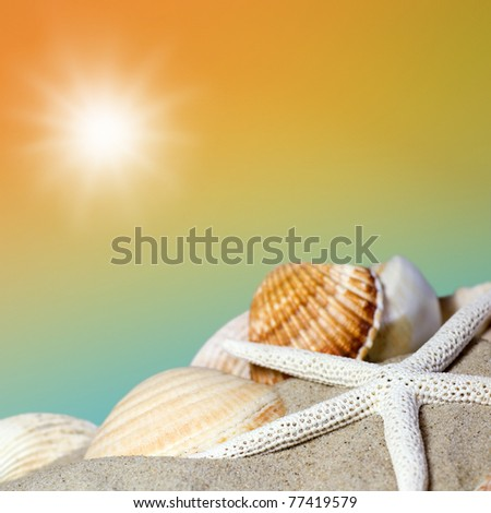 Sunny day at the beach with starfish and shell