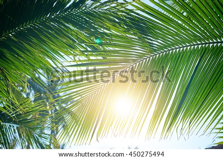 Sunny day. Close up of tropical palms leaves. - stock photo