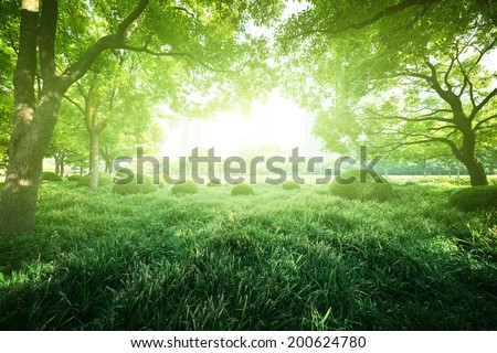 Sunny day in summer park - stock photo