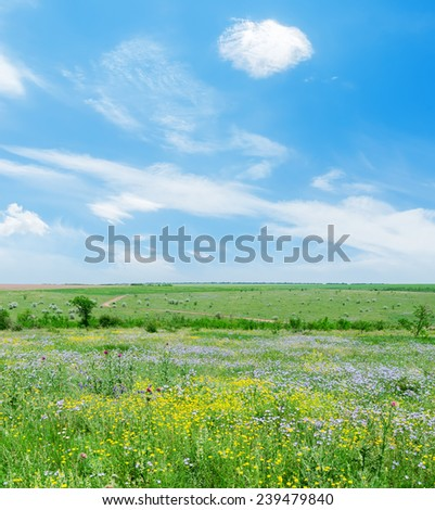 sunny day on green landscape with flowers and blue sky with clouds - stock photo