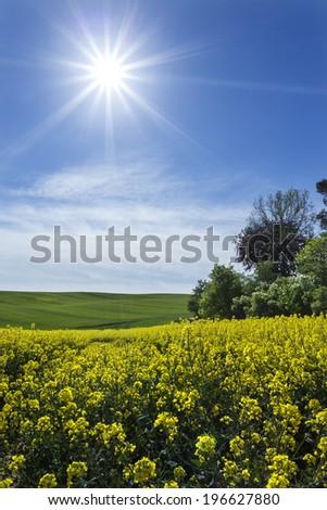 Sunny day on north Polands fields.Pomerania province - stock photo