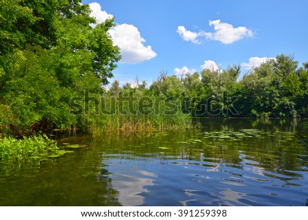Sunny day on the river with reeds and forest against a blue sky - stock photo