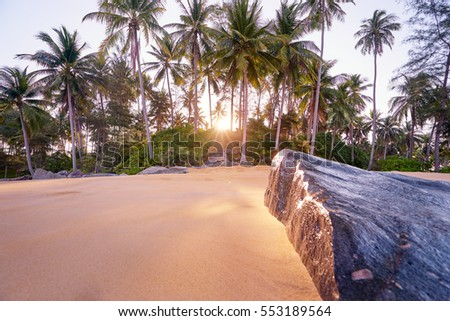 Sunny day on the tropical beach with coconut palm trees.