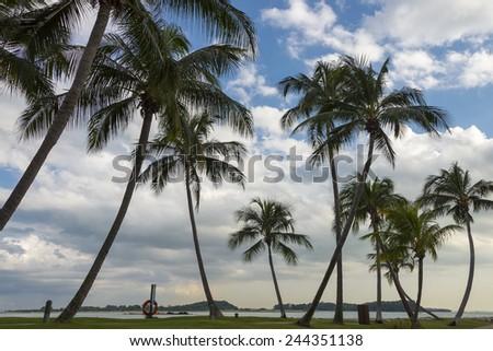 sunny day, palm tree - stock photo