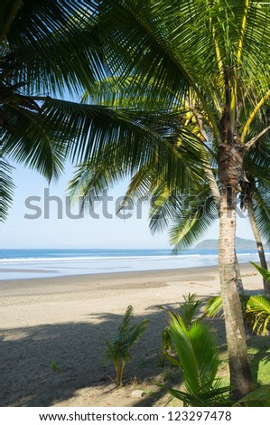 Sunny exotic beach seen through palm trees