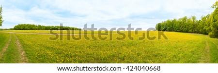Sunny field of dandelions - stock photo