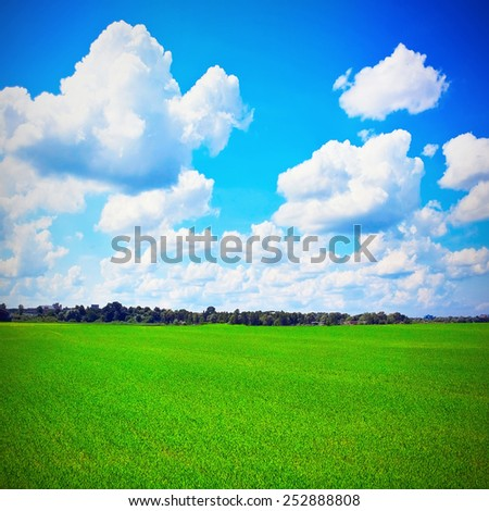 Sunny field with cloudy sky - stock photo