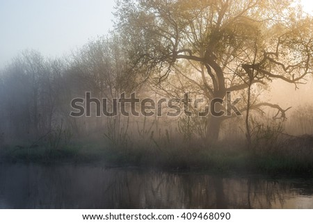 Sunny forest early in the morning on the edge of the lake, misty landscape, trees in the foreground, Dry reeds, spring - stock photo