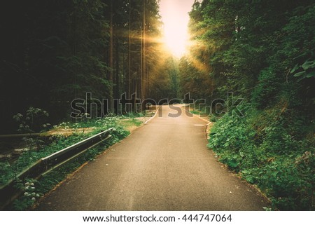 Sunny forest road - stock photo