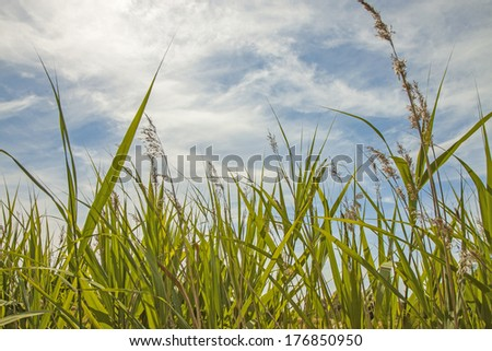 sunny grass meadow - stock photo