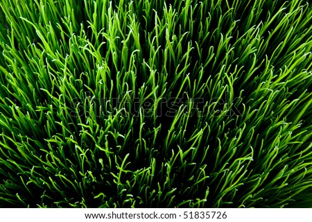 sunny grass. top down view detailed texture