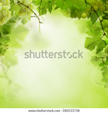 Sunny green background with grape vines and leaves - stock photo