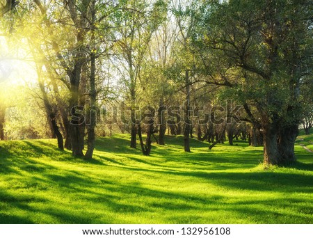 Sunny green forest with shadow