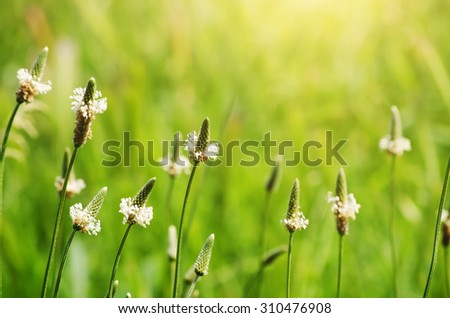 Sunny Green Meadow With Sunlight - stock photo