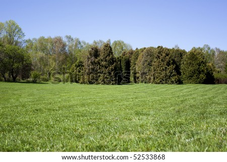 Sunny image with green grass and trees