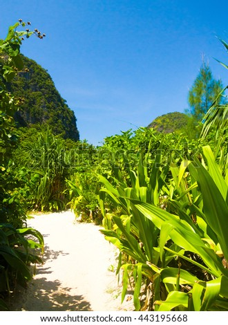 Sunny Landscape Jungle Trekking  - stock photo
