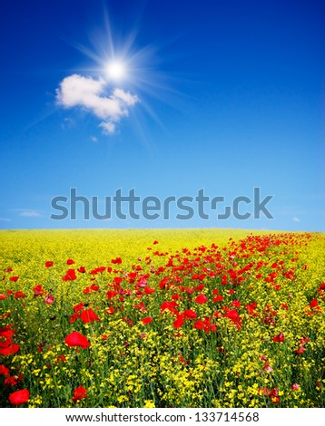 Sunny landscape with flowers in a field - stock photo