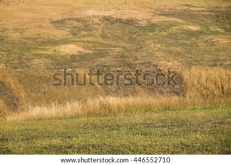 Sunny landscape with grassy meadows in spring.  - stock photo