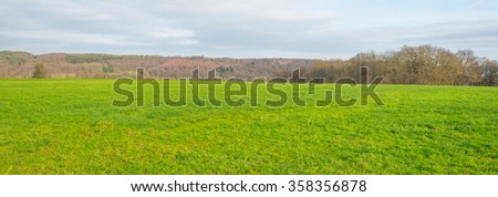 Sunny meadow on a hill in winter