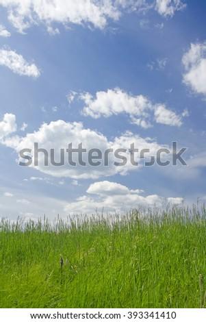 Sunny meadow scene - stock photo