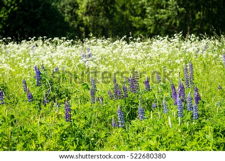 sunny meadow with flowers and green grass in summer at countryside