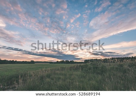 sunny meadow with flowers and green grass in summer at countryside - vintage look