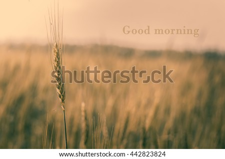 Sunny morning in the summer outdoors. Good morning - stock photo