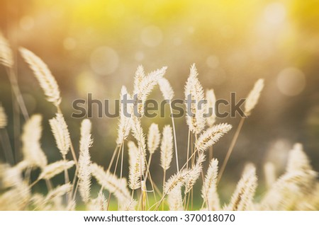 Sunny Rural Meadow in Morning - stock photo