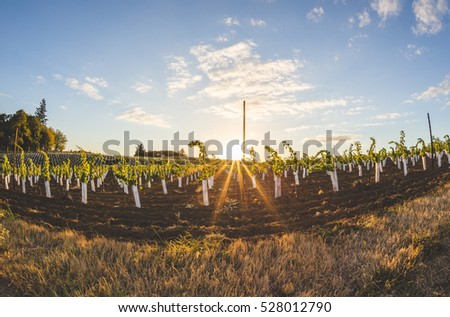 Sunny sky over vineyard field