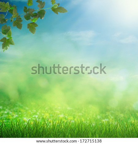 Sunny sky with spring meadow and growing grass - stock photo